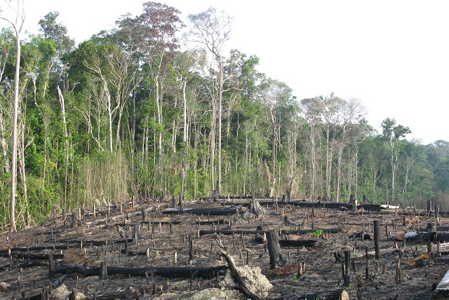 environment concerns conflicts in the rainforest The environment is pretty wet in tropical rainforests, maintaining a high humidity of 77% to 88% year-round the yearly rainfall ranges from 80 to 400 inches (200 to 1000 cm), and it can rain hard.