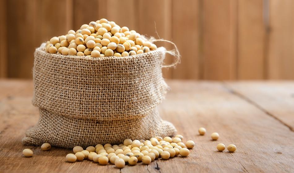 Using Soya Beans for Plastic
