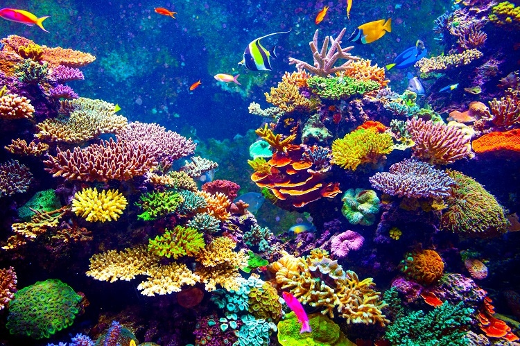 Rebuilding Coral Reefs Around The World