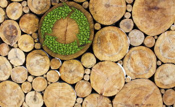 How Wood is Creating an Energy Revolution
