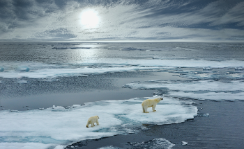 The Ecological Impact of Climate Change on Polar Bears