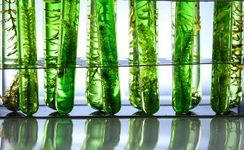Will the Elemental Analysis of Algae Benefit the Renewable Energy Field?