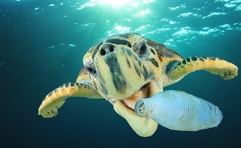 How Plastic Pollution is Affecting the Ocean Wildlife