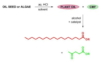 Process for the conversion of oil crops into a hybrid biodiesel. The mixture of plant oil and carbohydrate-derived CMF is co-esterified, giving rise to a fuel cocktail containing fatty acid ester (red) and levulinate ester (green).