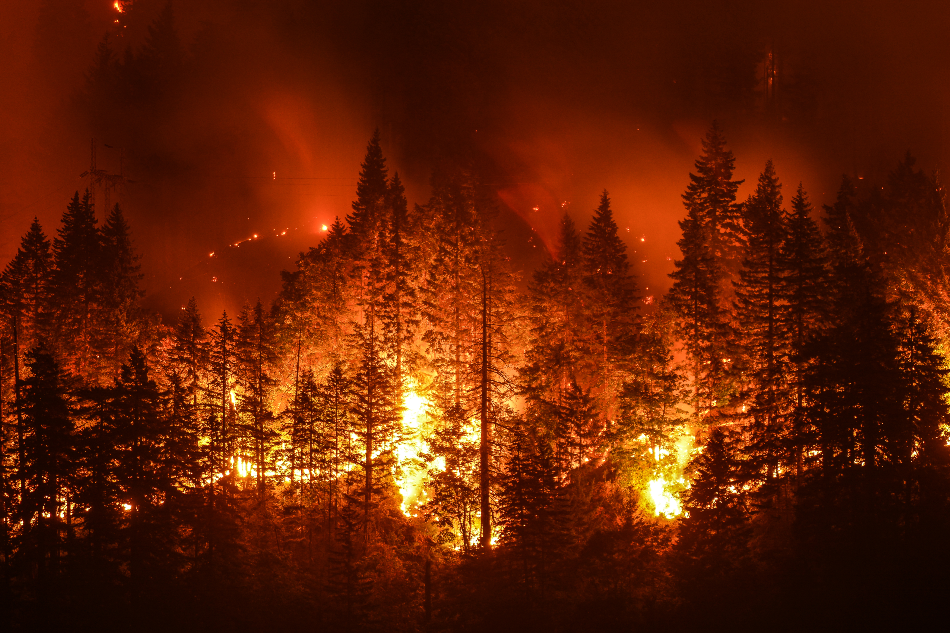 New Research Confirms Role of Climate Change in Forest Wildfires