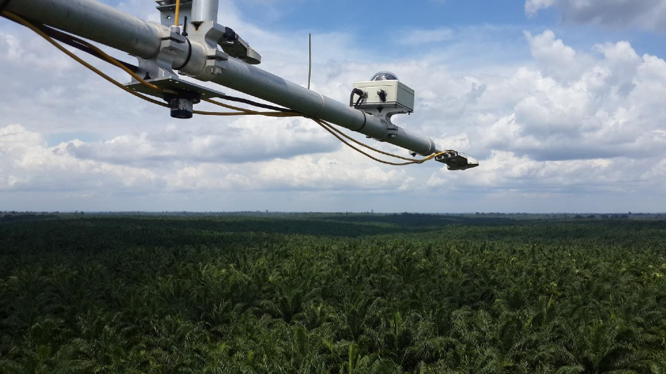 Scientists Examine the Effect of Palm-Oil Biodiesel on Greenhouse Gas Emissions - AZoCleantech