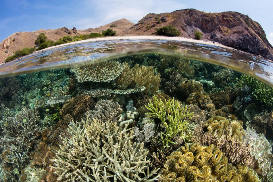 How Renewable Energy Developments are Threatening Key Biodiverse Areas - AZoCleantech