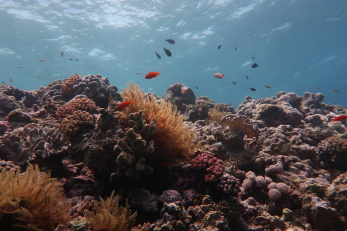 The Great Barrier Reef Has Lost Half Its Coral In 25 Years