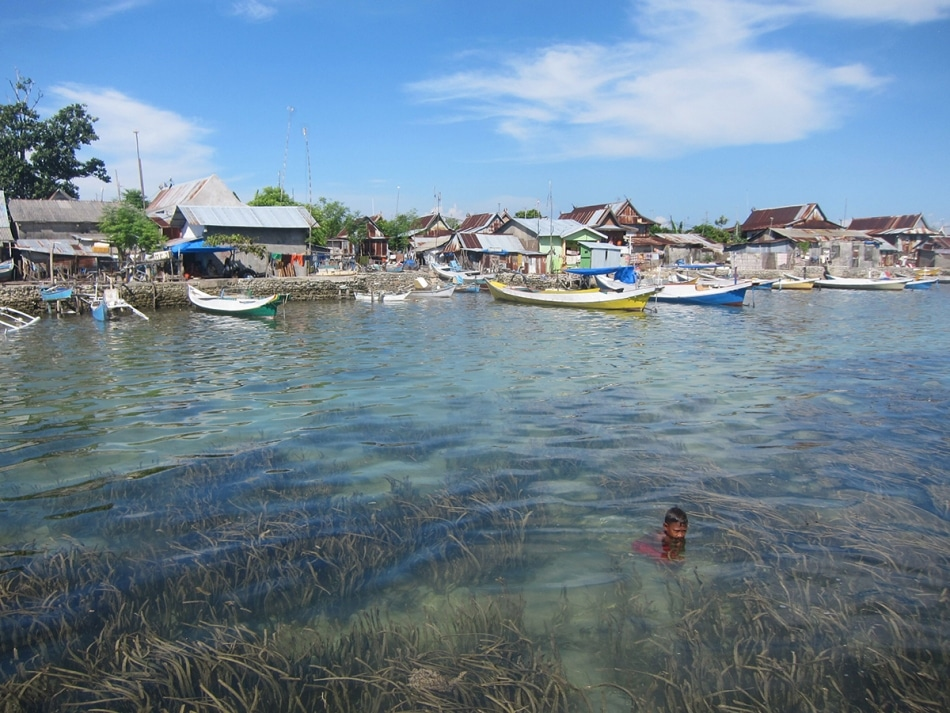 Seagrass Meadows Can Reduce Bacterial Exposure for Corals, Sea Creatures and Humans
