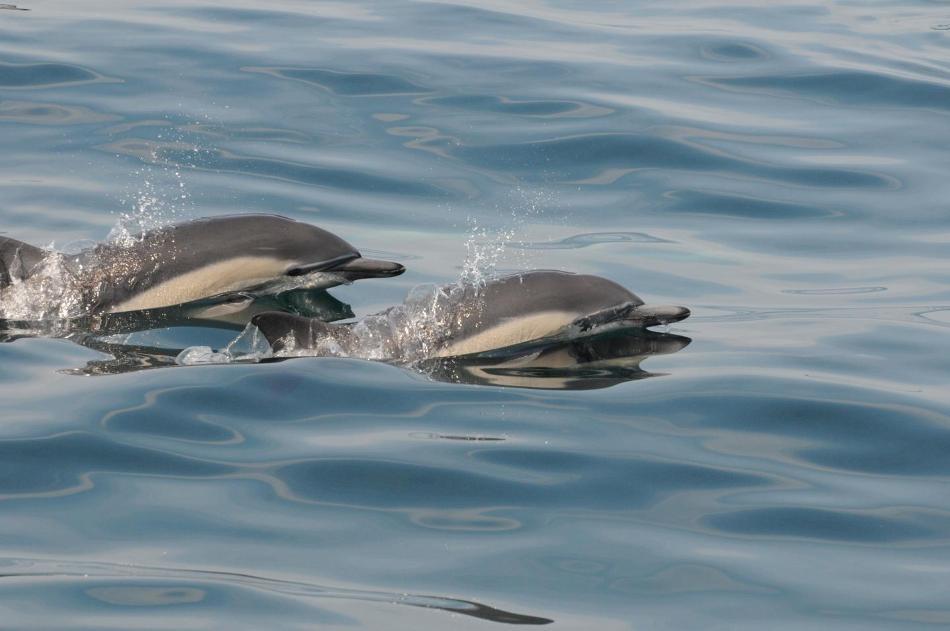 Study Reveals Shortening of Oceanic Food Chain Due to Environmental Disturbances