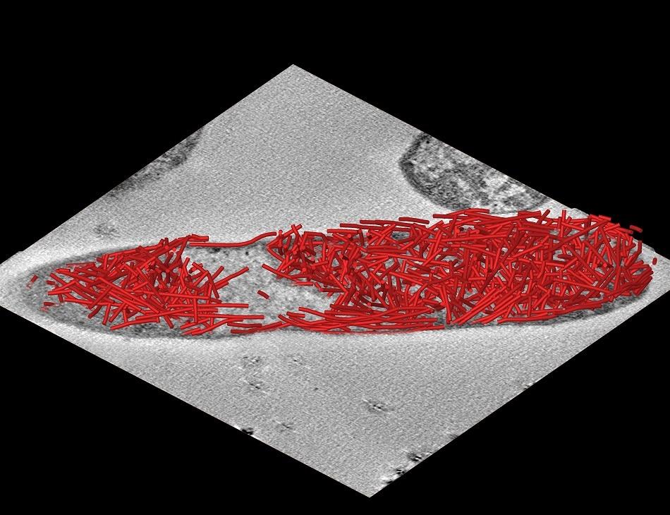 Bacteria development marks new era in cellular design