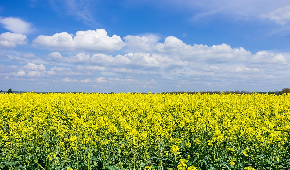 """Temperature-Resilient Crops Are Now an """"Achievable Dream"""""""