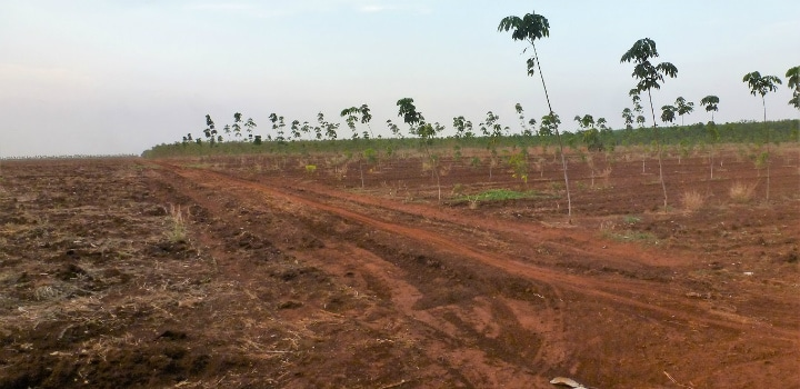 Study Reveals Payments are Not Attractive Enough to Protect Forests in Southeast Asia