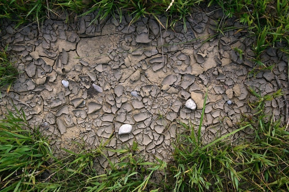 Experts Predict Far-Reaching Effects of Drought and Heatwave on Soil Ecosystem