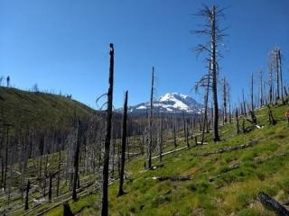Warmer, Drier Climate Expected to Increase Disturbances in World's Temperate Forests
