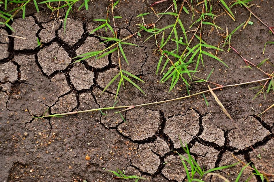Researchers Recommend Eight Steps to Increase Soil Carbon for Climate Action