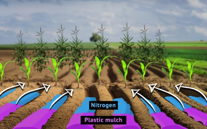 Researchers Describe Optimal Conditions for Combined Use of Plastic Mulching and Nitrogen