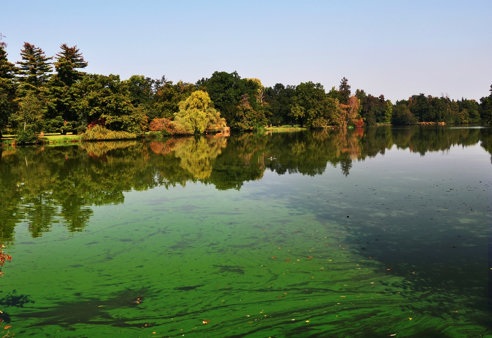 Hazardous algae blooms may protect freshwater food chain