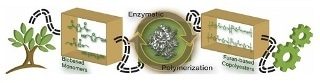 New Enzyme-based Polymerization Method Enable Greener PEF Production