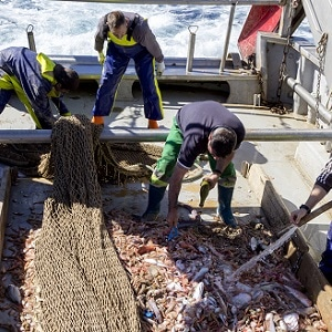 RepescaPlas Project Targets Recovery of Toxic Marine Waste