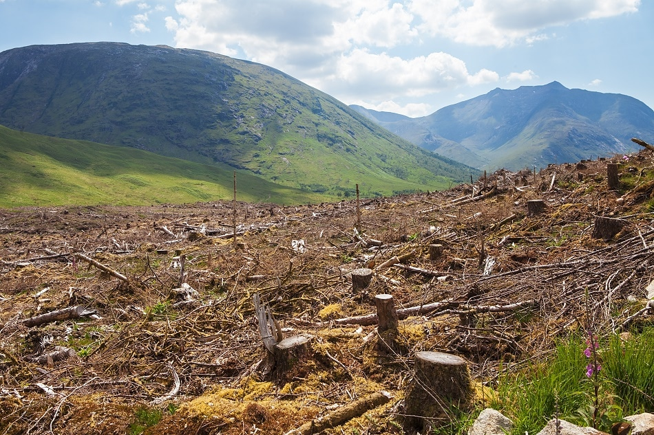 The Potential Impact of Complete Deforestation and the Technology Preventing It
