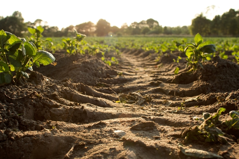 Move to Implement Policies that Build Soil Carbon to Mitigate Climate Change