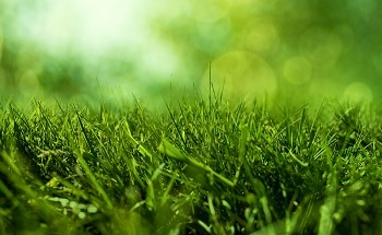Fescue Grass Proves to be Inexpensive and Key Source for Hydrogen