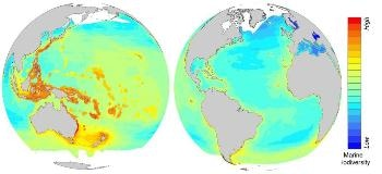 Scientists Ascertain Critical Impact of Climate Change on Specific Areas of Marine Biodiversity