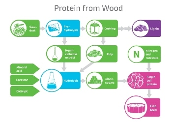 Wood-Based Protein Could Help Address Global Food Challenge