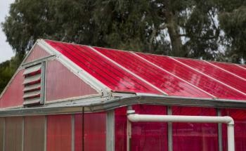 Solar Greenhouses with Magenta Panes can Generate Electricity and Grow Crops Simultaneously