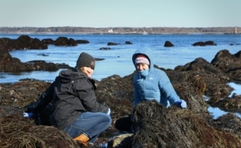 Studying the Effect of Climate Change on Coastal Ecosystems