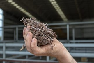 Feeding Seaweed to Cows: Our Livestock Methane Research Lights Up