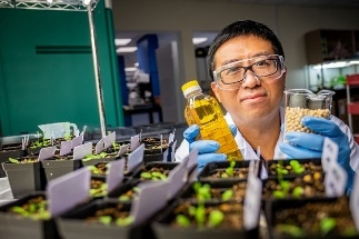 A Sustainable Method to Boost Seed Oil Yield in Crops