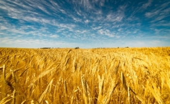 Study Evaluates Potential Impact of Observed Climate Change on Global Food Production