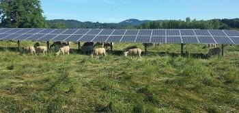 Solar Power and Agriculture Could Jointly Produce Reliable Electricity