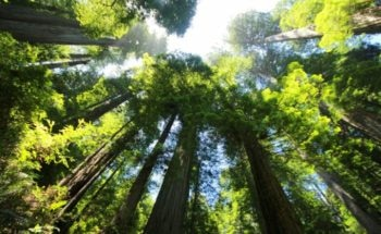 Study on Potential of Trees to Decelerate Global Warming in the Future