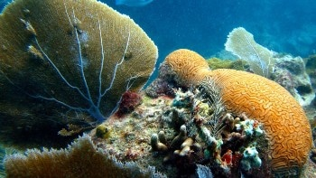 Metal Pollution in Warming Oceans is a Serious Threat to Soft Coral Sea Fans
