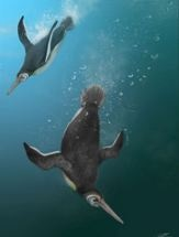 When Penguins Ruled after Dinos Died