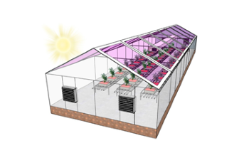 Transparent Solar Panels can Help Greenhouses Turn Energy Neutral
