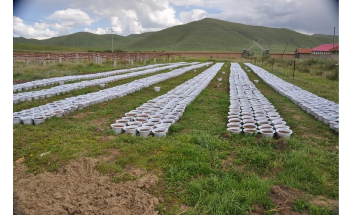 Study Examines Effect of Climate Change on Tibetan Plateau's Seeds