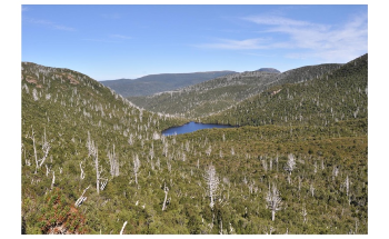 Tasmania's Ancient Rainforest Faces Grim Future with Warming Climate