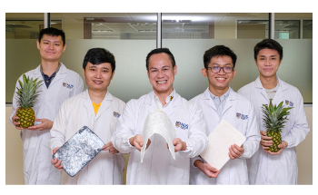 Researchers Produce Eco-Aerogels from Pineapple Leaves